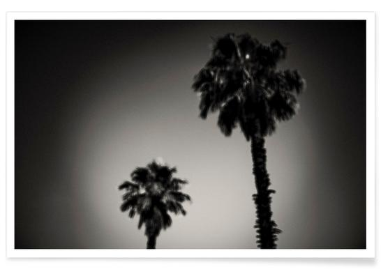 Why are palm trees so damn happy? Poster