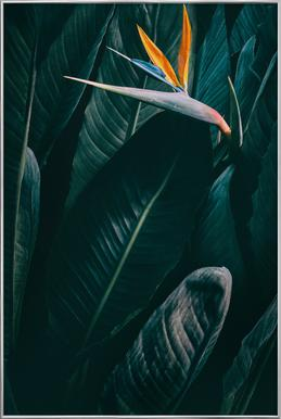 Bird of Paradise -Poster im Alurahmen