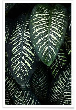 Jungle 1 -Poster