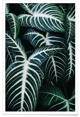 Jungle 2 affiche