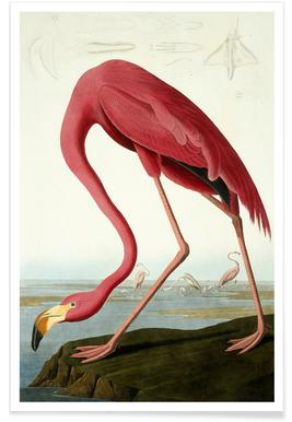 American Flamingo (by List Collection) - Premium Poster