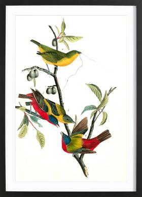 Painted Bunting (by List Collection) - Poster in houten lijst