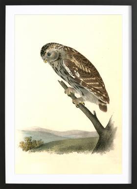 Little Night-Owl (by List Collection) -Bild mit Holzrahmen