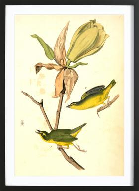 Kentucky Flycatching-Warbler (by List Collection)