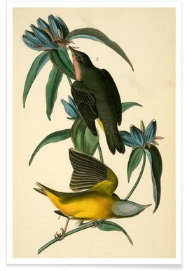 Connecticut Warbler (by List Collection)