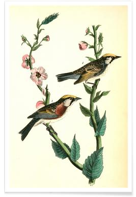 Chestnut-sided Wood-Warbler (by List Collection)