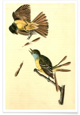 Great Crested Flycatcher (by List Collection)