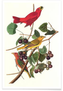 Summer Red Bird, 1828, (by List Collection) Poster