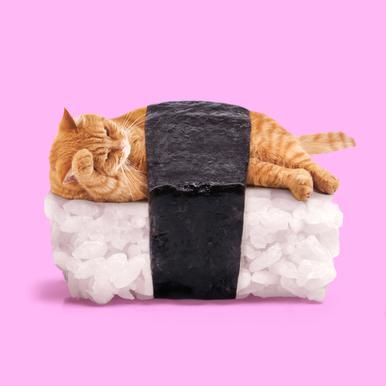 Sushi Cat canvas doek