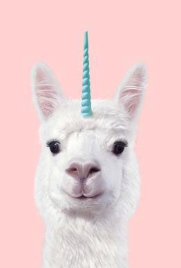 Alpaca Unicorn -Acrylglasbild