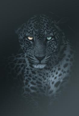 Eyes in the Night -Acrylglasbild