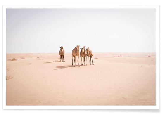 Camels Sahara poster