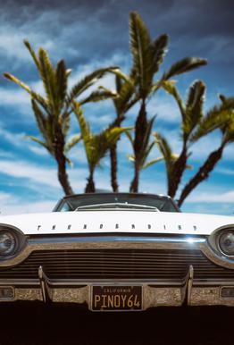 Tropic Thunderbird Aluminium Print