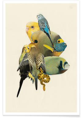 Budgies and Fish Poster