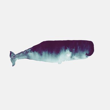 Whale I