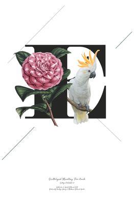 Botanical Alphabet - E Aluminium Print