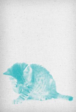 Kätzchen 02 tableau en verre