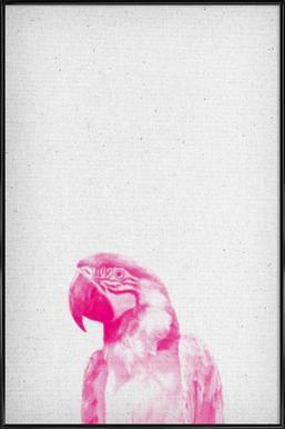 Papagei 02 -Bild mit Kunststoffrahmen