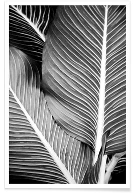 Tropical Leaves affiche