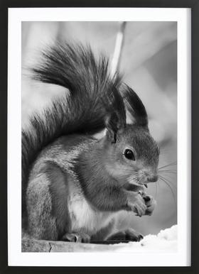 The Squirrel -Bild mit Holzrahmen