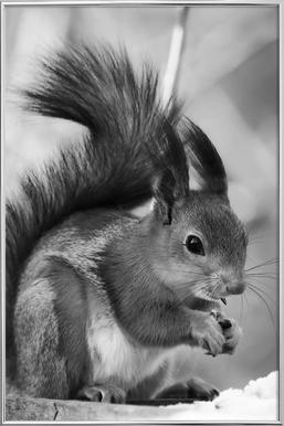 The Squirrel poster in aluminium lijst