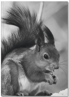 The Squirrel Notebook