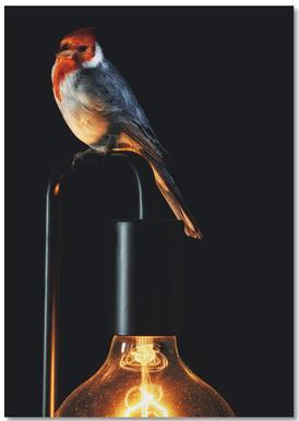 Birds Everywhere 7 -Notizblock