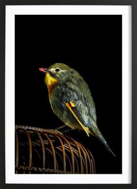Birds Everywhere 12