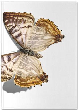 Butterflies 5 Notebook