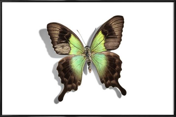 Butterflies 6 Framed Poster