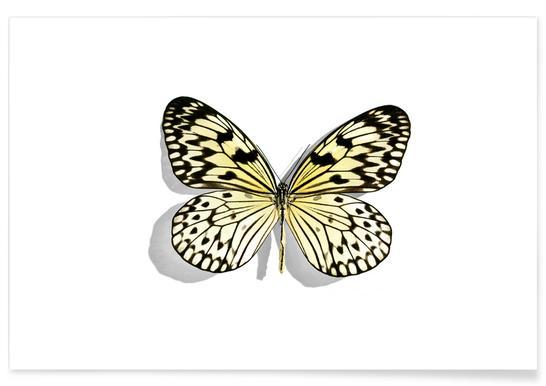 Butterflies 7 Poster