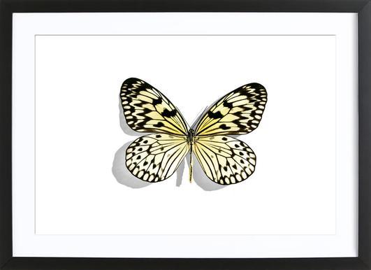 Butterflies 7 Framed Print