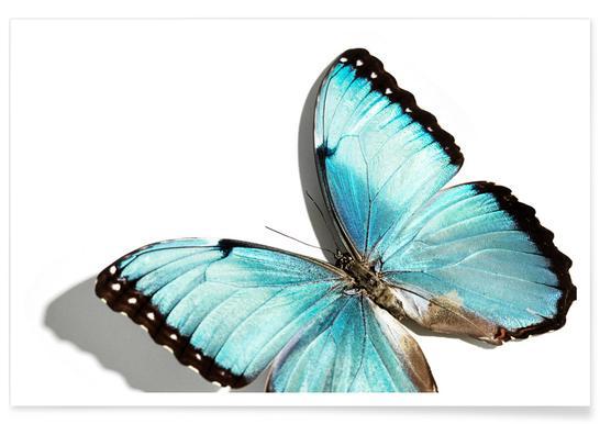 Butterflies 10 - Premium Poster
