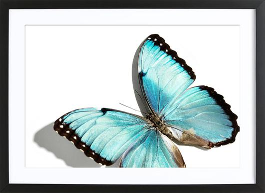 Butterflies 10 - Poster in Wooden Frame