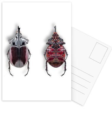Animalium 6 -Postkartenset