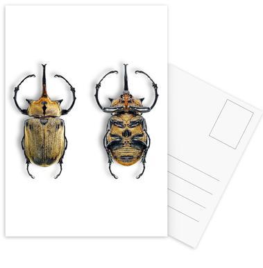 Animalium 8 -Postkartenset
