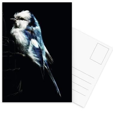 Birds Everywhere 1 Postcard Set