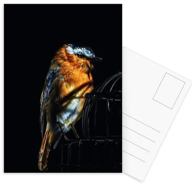 Birds Everywhere 2 Postcard Set