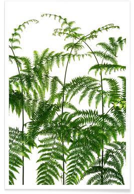 Flora - Adlerfarn