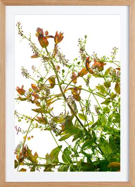 Flora - Eukalyptus - Poster in houten lijst