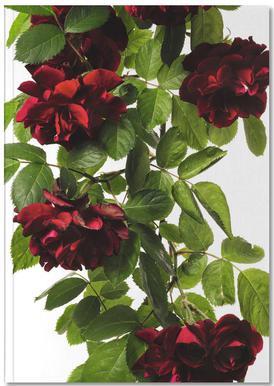 Flora - Rose Notebook
