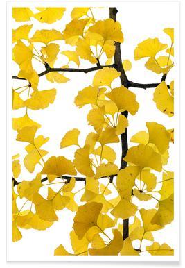 Flora - Ginko - Premium poster