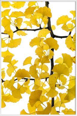 Flora - Ginko - Poster in Standard Frame