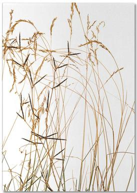 Flora - Gras