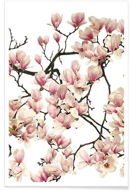 Flora - Magnolie - Premium poster