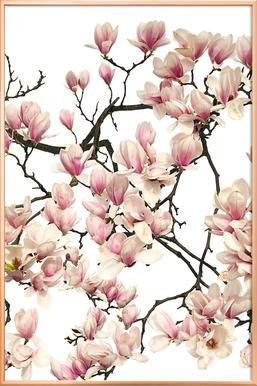 Flora - Magnolie poster in aluminium lijst