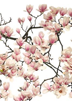 Flora - Magnolie Canvas Print