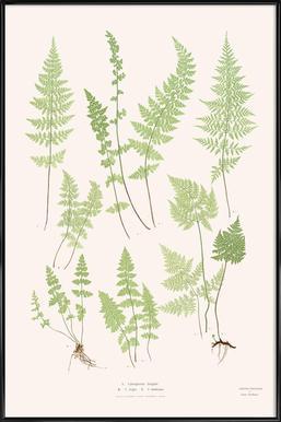 Ferns Framed Poster
