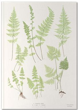 Ferns Notebook