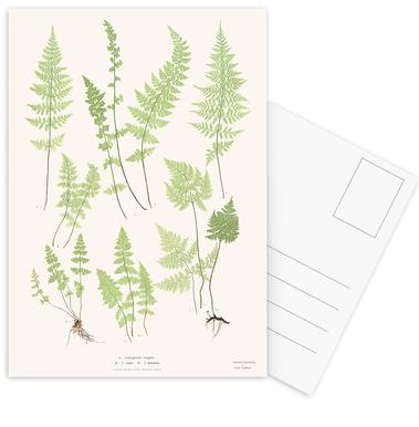 Ferns Postcard Set